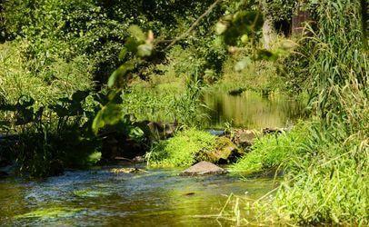 Divoký potok Metuje tvoří přirozenou hranici na jihozápadní straně kempu.